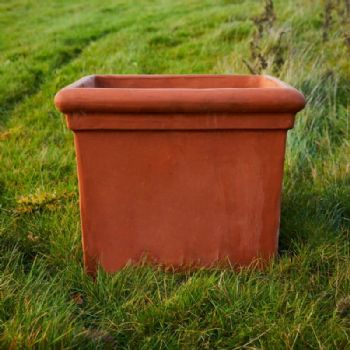 Terracotta Baytree Square planter